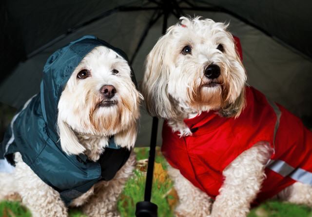 Dog clothing for wet weather